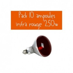 PACK 10 AMPOULES IR 250W ROUGE